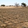 Lessons for Sustainable Development from the UN's Global Desertification Regime