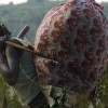 Why History Repeats Itself in Eastern DR Congo