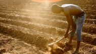 Review – Will Africa Feed China?