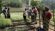 Revitalizing African Indigenous Ways of Knowing and Knowledge Production
