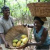 Raising the Bar on Chocolate: Cocoa Farmers in Ghana Shape the Future