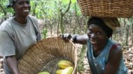 Raising the Bar on Chocolate: Cocoa Farmers in Ghana Shape the Future