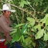 Fairtrade: Internationalism by Supermarket?