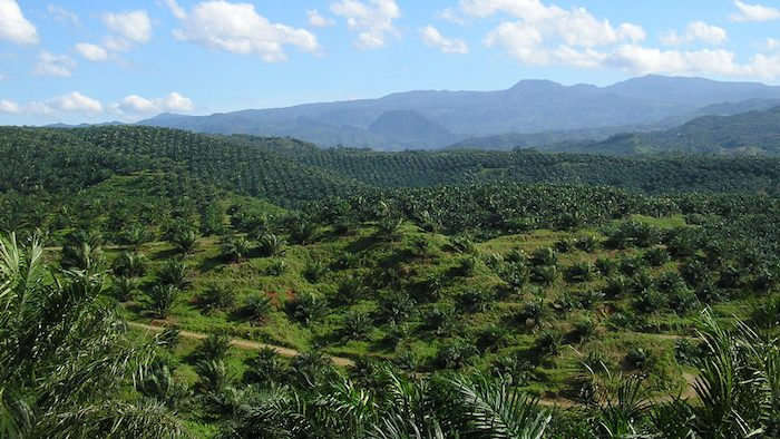 Reworking Palm Oil Welfare from the Grassroots in Indonesia