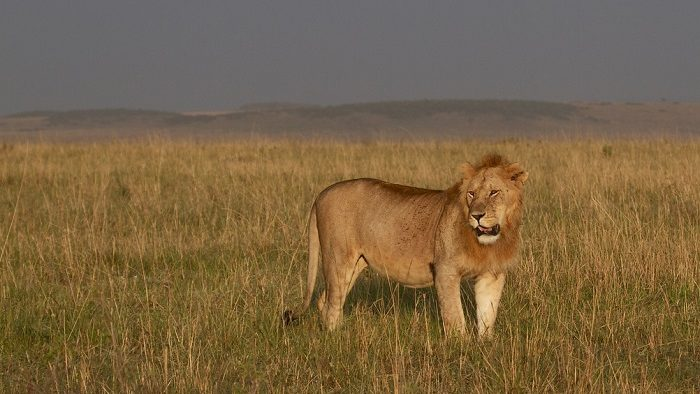Institutions Matter, Or, What I Learned Sleeping with Lions in Kenya